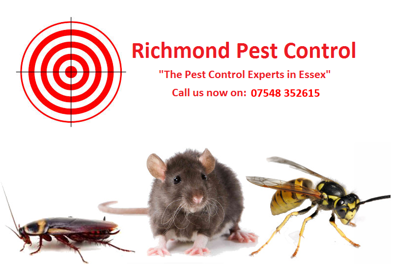 Richmond Pest Control Essex